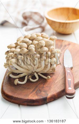 Brown shimmed mushrooms. Healthy superfood.