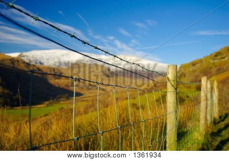Fenced Vistas