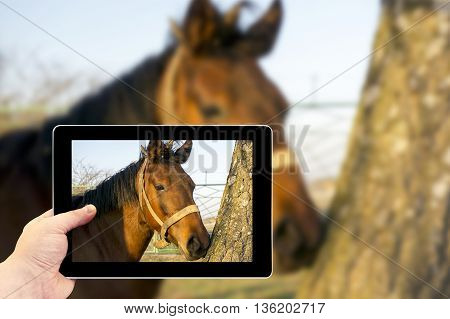 Tablet Photography Concept. Taking Pictures On A Tablet. A Brown Horse In The Forest