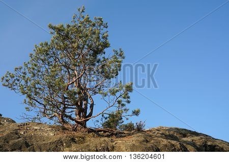 tree on a rock in the Harz National Park