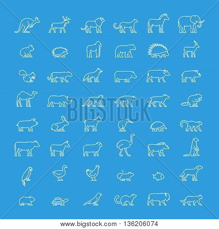 Vector line set of animal icons. Linear ferret ostrich meerkat warthog chicken mouse hedgehog and others. Open path.