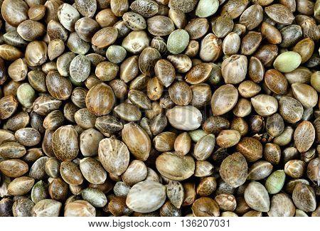 Group of hemp seeds on background closeup