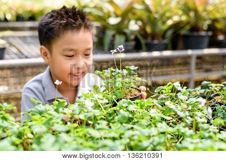 Boy And Little Plant