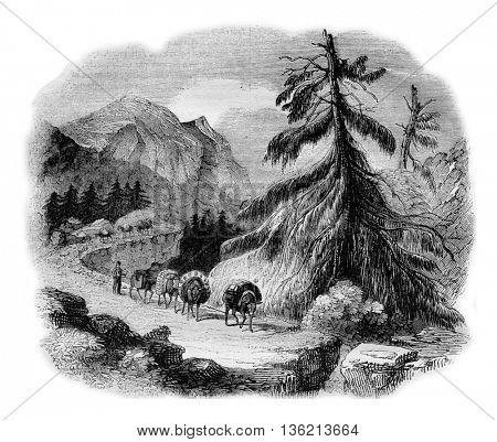 For passage of Oberhasli, vintage engraved illustration. Magasin Pittoresque 1836.
