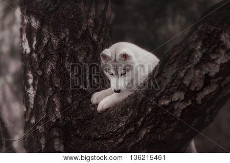 Dog. Portrait on the tree in outdoor. Portrait of Siberian Husky