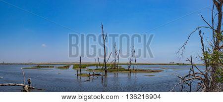 Dead Tree In Swamp Wetlands