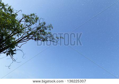 Night Sky Stars Tree