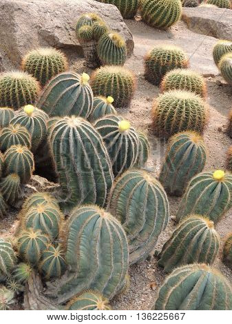 park plant growth cacti on earth close-up