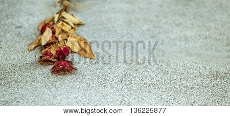 on a stone slab is a faded rose. symbol photo for solitude and oblivion.