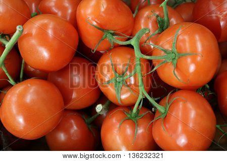 Tomato (Solanum lycopersicum) - herb vegetable crop
