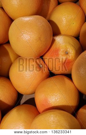 Grapefruit (Citrus paradisi) - the fruit of a subtropical evergreen tree