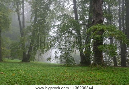 Fog in green park. Early morning in the middle Europe.