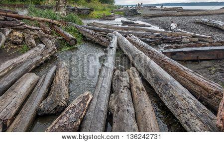 Closeup shot of driftwood logs along the shore at Seahurst Beach in Burien Washington.