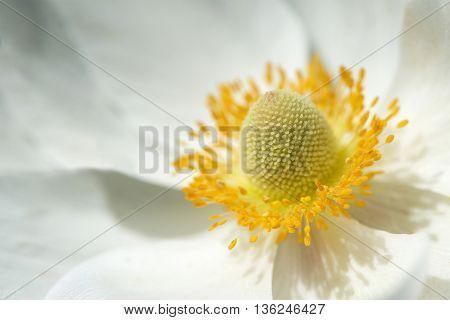 White flower - macro. Natural floral vintage background