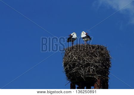 Stork couple in a nest on a chimney