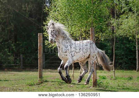 Horse On Nature