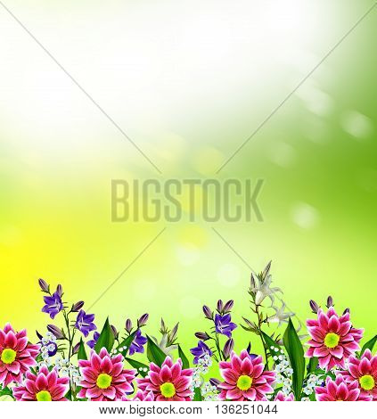 floral background of flowers bluebells. colorful flowers