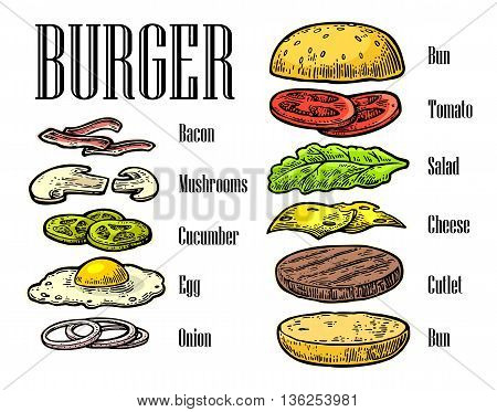 Burger ingredients on white background. Set isolated color painted components. Vector vintage engraving Illustration for poster menu web banner info graphic
