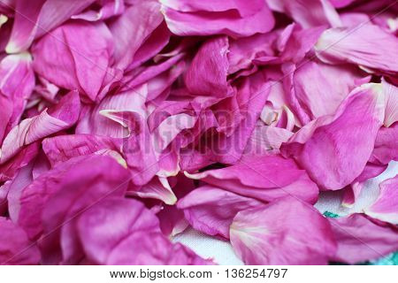 the tattered petals pink rose background close to