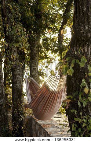 A person relaxing in a hammock in the shade of a tree on a shoreline viewed from behind.