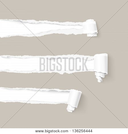 Three craft gray torn paper with a paper scroll over white background with space for text. Realistic vector torn damaged paper with ripped edges. Torn paper template. Paper rolls.
