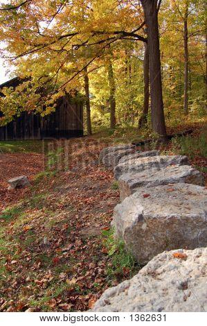 Autumn Scene 11