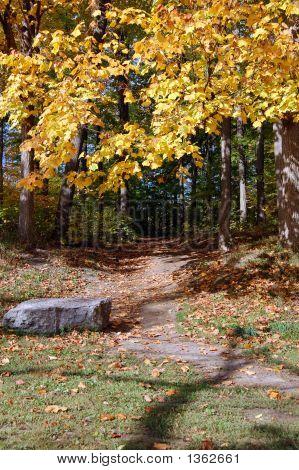 Fall Scene 2