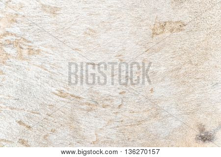 Traces on fragment of cow skin or cowhide close up leather textured.
