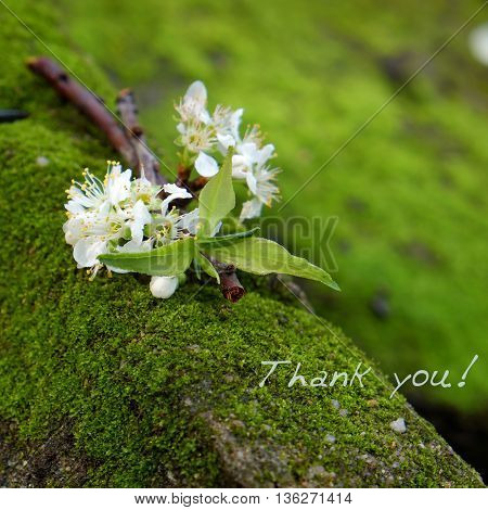 Thank You Background, White Flower