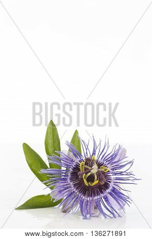 Herbal Medicine and aromatic beautiful purple passiflora