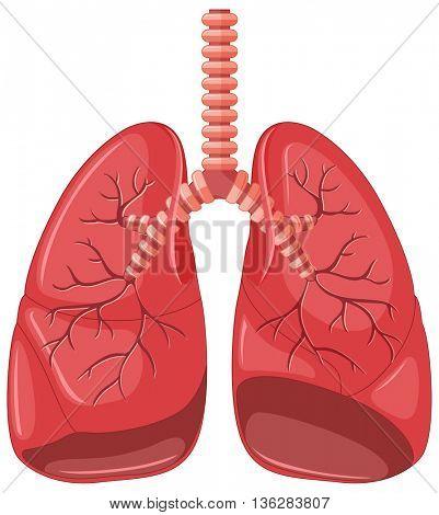 Lung diagram of pneumonia illustration