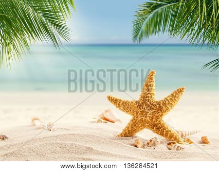 Tropical beach with various shells in sand, copyspace for text. Concept of summer relaxation