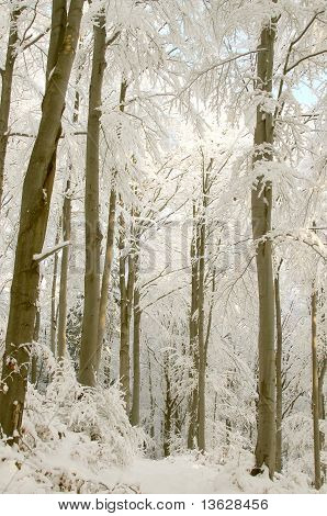 Trail in winter forest