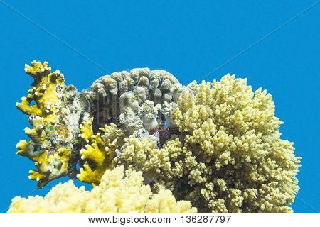 colorful coral reef at the bottom of tropical sea underwater