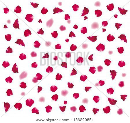 Background of beautiful rose petals. vector illustration.