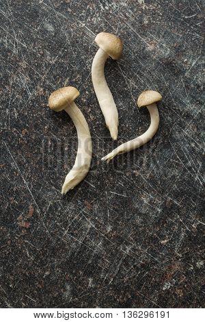Brown shimeji mushrooms. Healthy superfood on crackle kitchen table