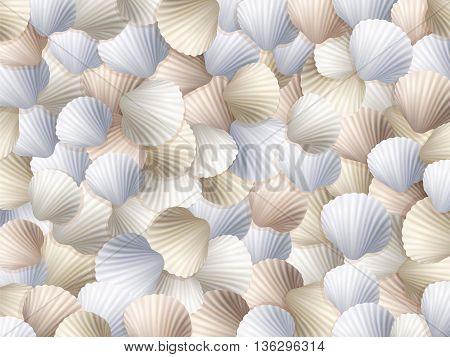 Shells Sea Beach Background