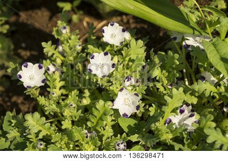 White flowers with stamen grow on background of green plants