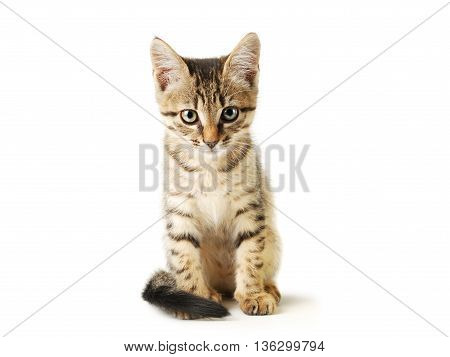 Little cute striped kitten isolated on white background. Domestic pet close-up.