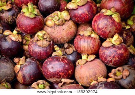 mangosteen on sale in the fruit market tropical fruit in the fruit market