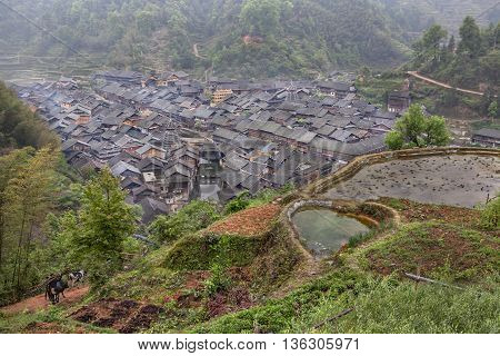 Zhaoxing Dong Village Guizhou Province China - April 7 2010: Panoramic views of the rice fields and the peasant village of ethnic minority with wooden huts and tiled roofs.