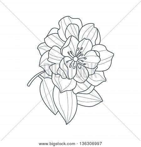 Fully Open Peony Flower Monochrome Drawing For Coloring Book Hand Drawn Vector Simple Style Illustration
