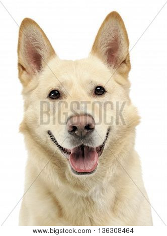 Smilie Face Dog Portrait In White Studio