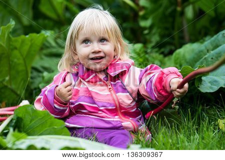 Little girl sitting in the Grass playing with rhubarb during this year's harvest