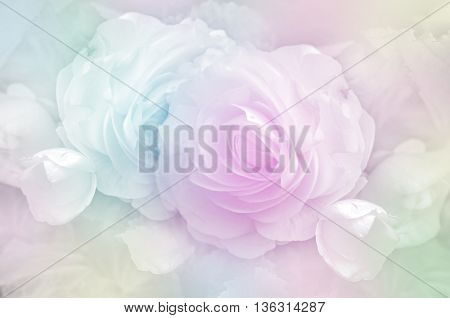 Roses In Soft Pastel Tone.
