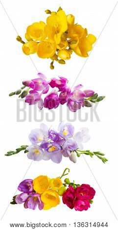 Set of fresh pink freesia flowers with buds isolated on white background