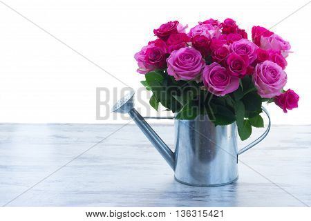 bouquet of pink and magenta fresh roses in watering can on table isolated on white background