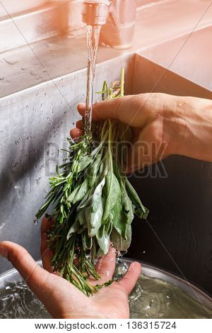 Man's hands washing sage. Water flows on green herb. Fresh rosemary and sage. Seasonings for meat.