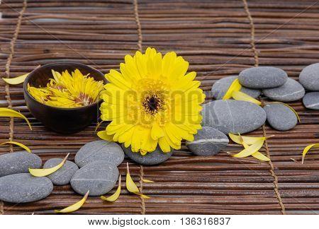Yellow gerbera with gray stones on mat ,petals