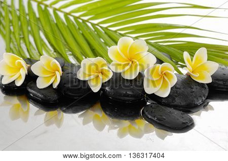 zen stones and Frangipani and palm leaf
